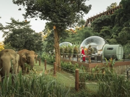 Santa Sighting at Anantara Golden Triangle's Jungle Bubble
