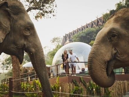 Anantara Golden Triangle Introduces Remote Working