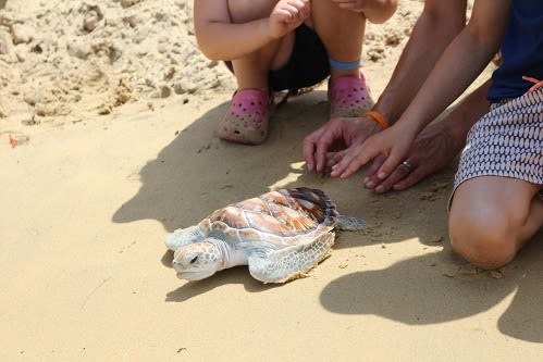 Anantara Resorts in Thailand Gives Nature a Helping Hand with Baby Turtle Release