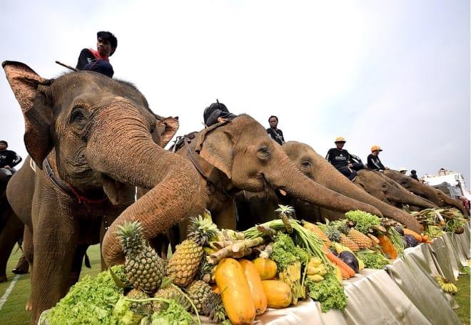 Anantara Announces Dates to Bangkok's 2018 King's Cup Elephant Polo Tournament
