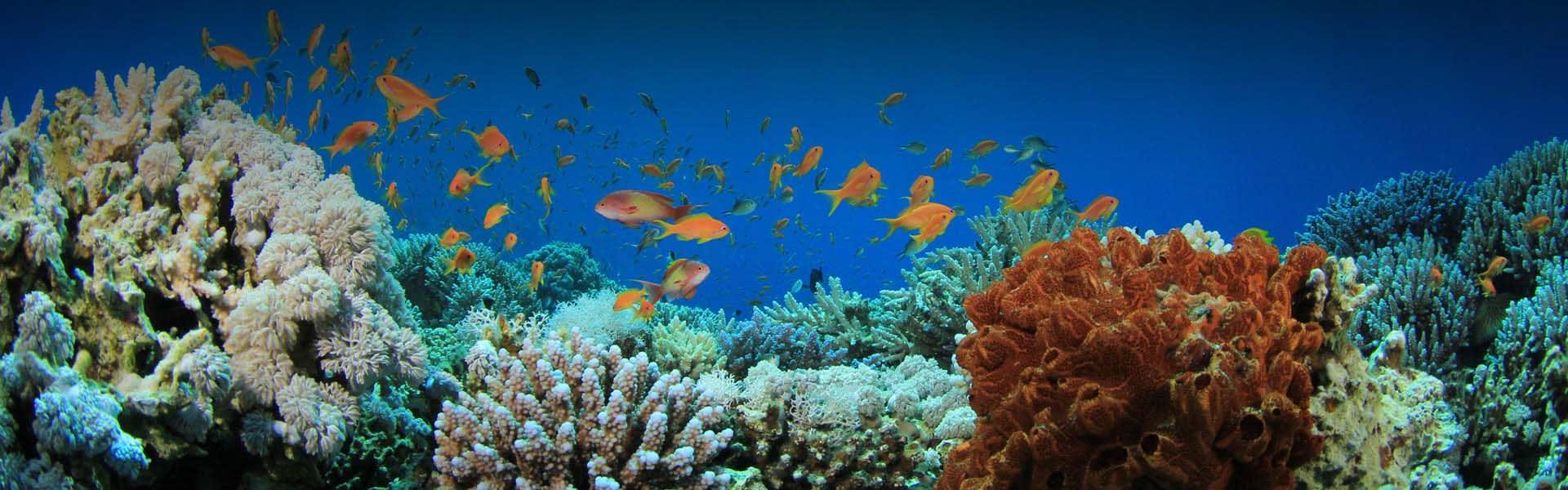 Anantara Dhigu Family Resort Coral Reef