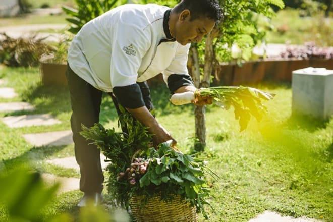 Discover Harvest Table by Anantara on Sri Lanka's Southern Coast An organic Farm to Plate Culinary Journey