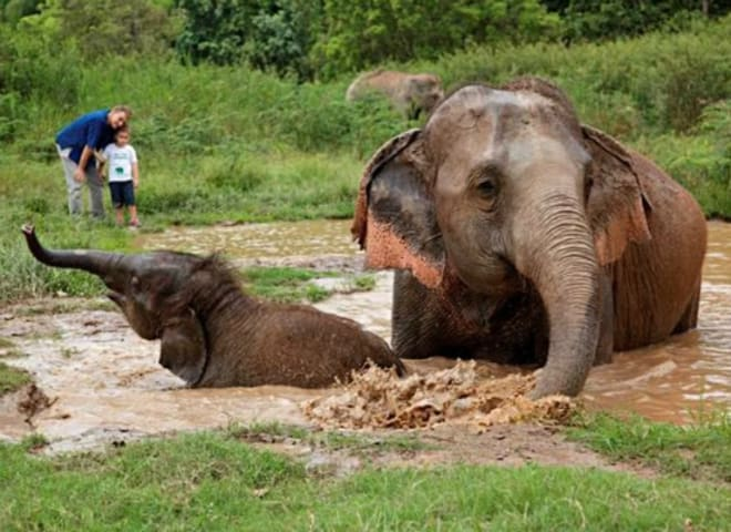 Anantara Golden Triangle Champions Natural Elephant Interaction with New 'Walking with Giants' Experience