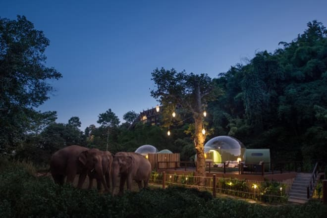 Jungle Bubble: The Elephant Outside the Room at Anantara Golden Triangle Elephant Camp & Resort