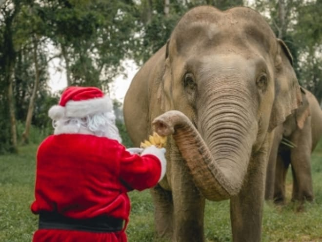 Anantara Golden Triangle - The Ultimate Holiday Gift Starring 3 Ton Beauties and Santa Claus