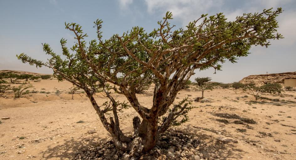 Heritage Sites Tour Around Salalah Oman with Al Baleed Resort
