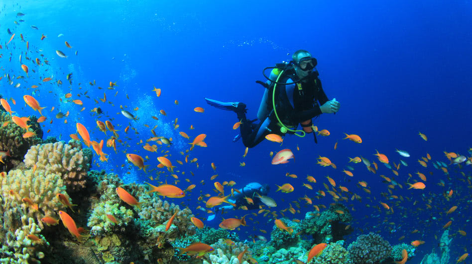 Diving Tours in Oman with Al Baleed Resort Salalah Surrounding Reef Fishes