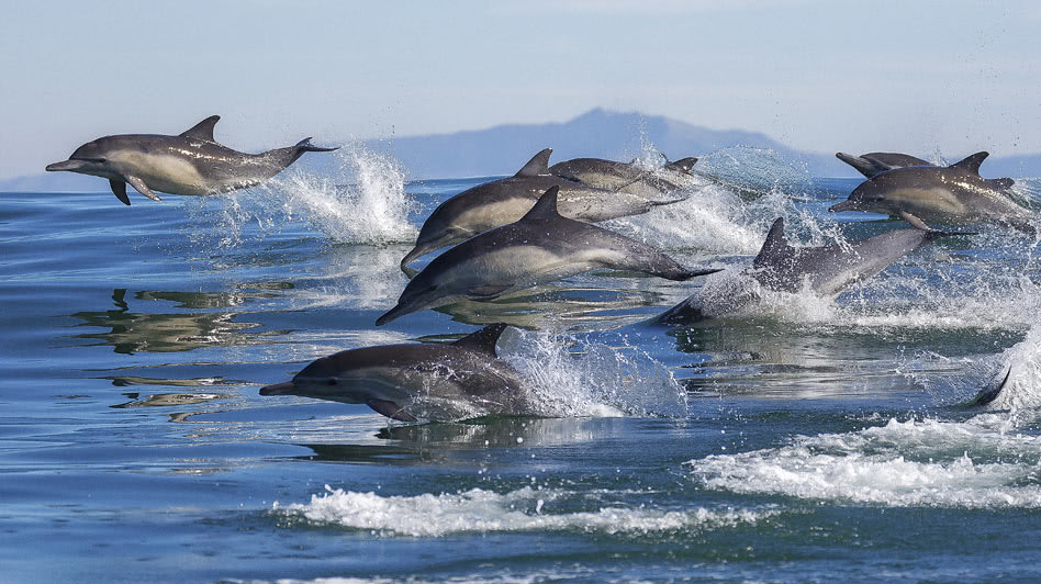 Dolphin Watching Tours While on Boat Rides in Oman