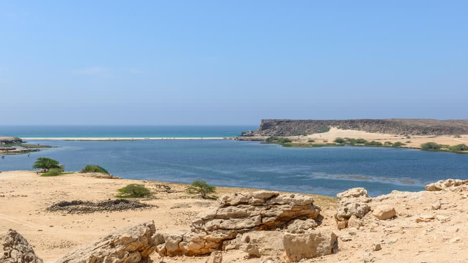 Birdwatching Experience near the Beach in Oman