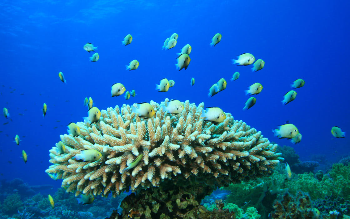 Anantara Dhigu Family Resort Coral Adoption