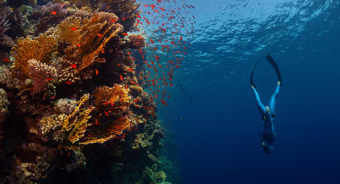 Free Diving at Anantara Dhigu Family Resort