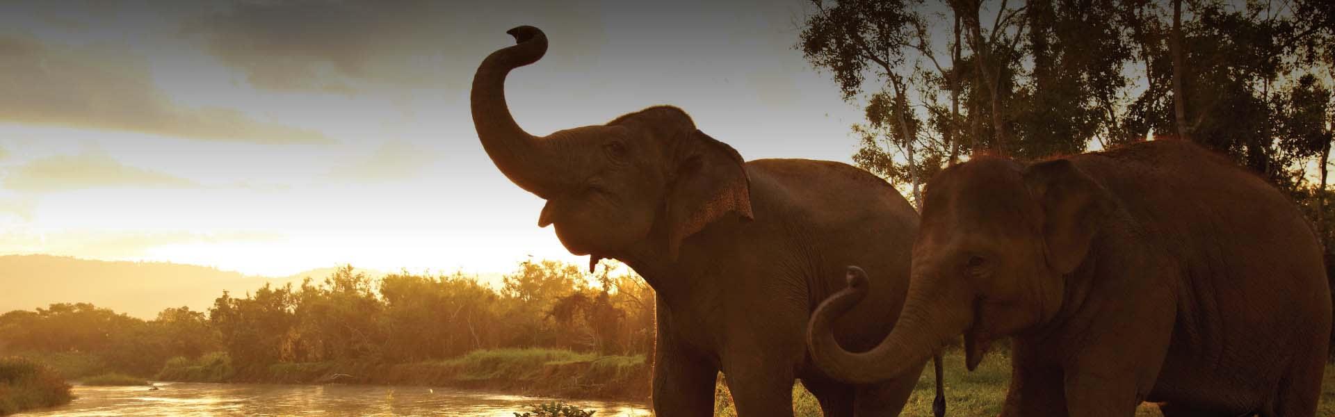 Chiang Rai Yoga | Elephant & Yoga and Spa by Anantara Golden