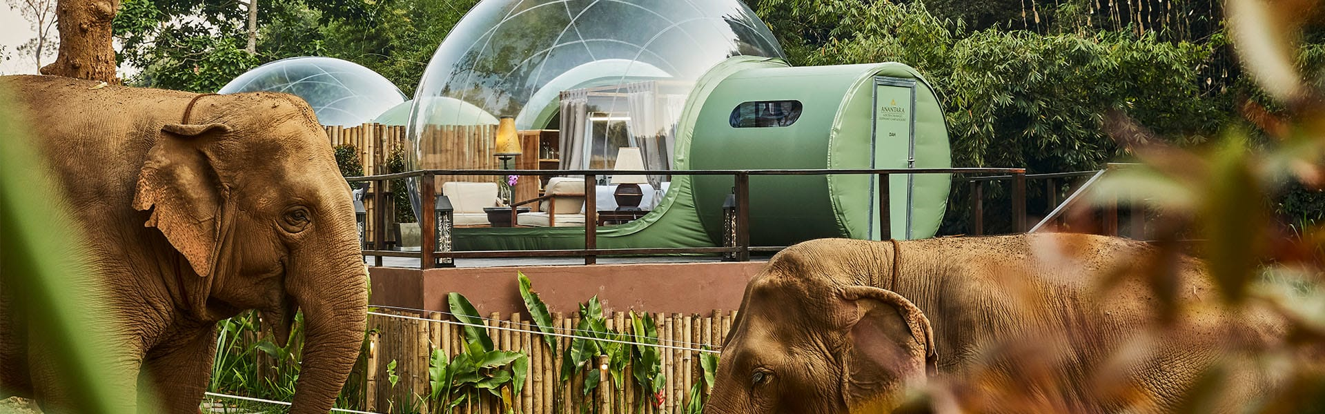 Jungle Bubbles  Discover the elephant outside your room