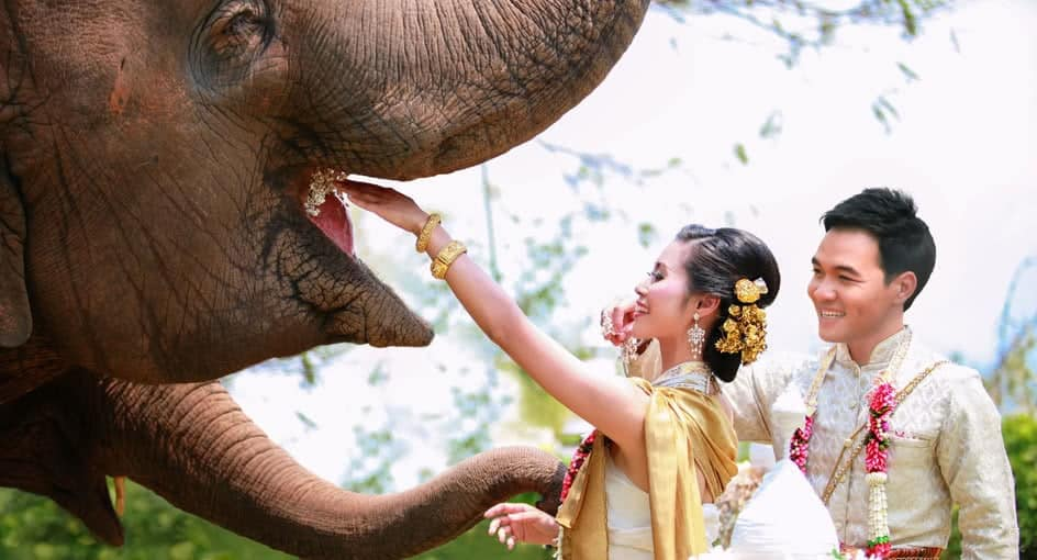 Image result for Anantara Golden Triangle Elephant Camp & Resort wedding