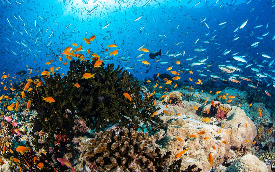 Anantara Kihavah Coral Reef and Marine Life
