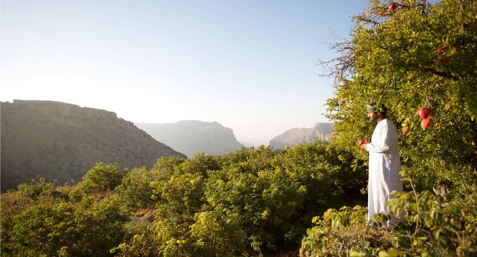 Pomegranate Tree near Al Jabal Al Akhdar Resort