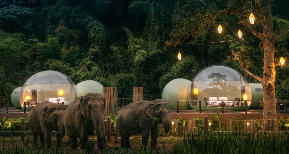 Jungle Bubble in Anantara Golden Triangle Resort
