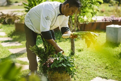 Discover Harvest Table by Anantara on Sri Lanka's Southern Coast An organic Farm to Plate Culinary Journey