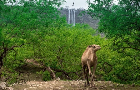 Al Baleed Resort Salalah Celebrates Khareef With  Stunning Imagery And Special Offers