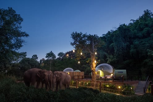 Jungle Bubble: The Elephant Outside the Room at Anantara Golden Triangle Elephant Camp & Resort