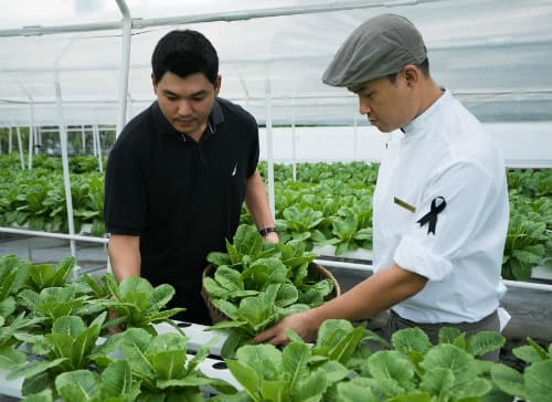 Fresh Is Best Naturally Just Ask Anantara's Own Hydroponic Farmer Chanuphan (Tong) Horsuwan