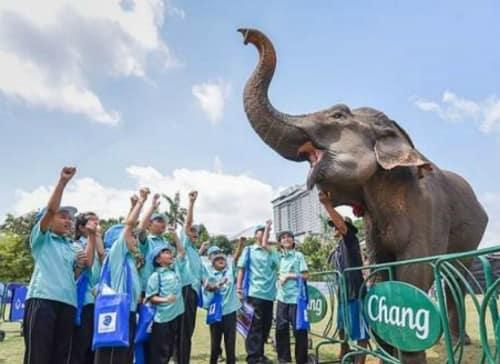 Anantara's King's Cup Elephant Polo Raises Millions For Thailand's Pachyderms