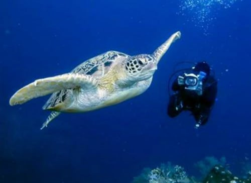 Experience Remarkable Undersea Adventures at Mozambique's Anantara Island Resorts