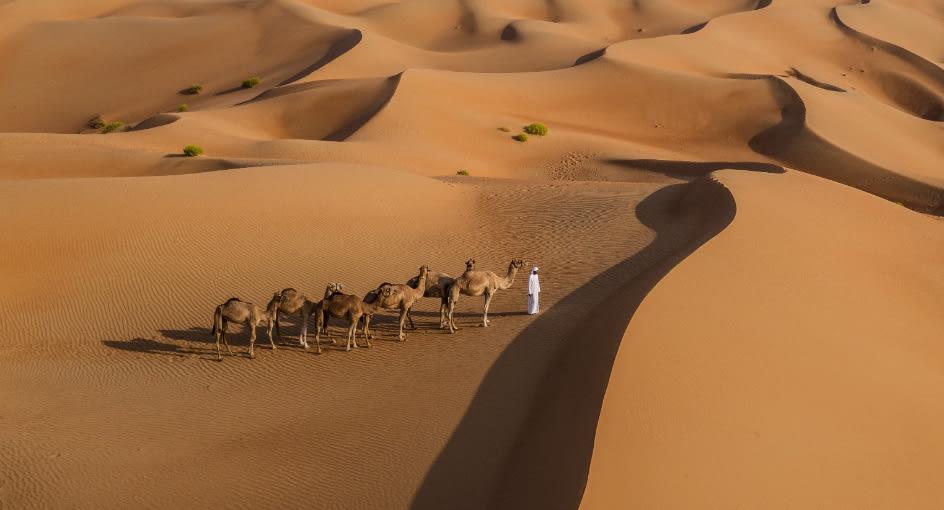 Camel Riding Activities in Qasr Al Sarab Desert Resort