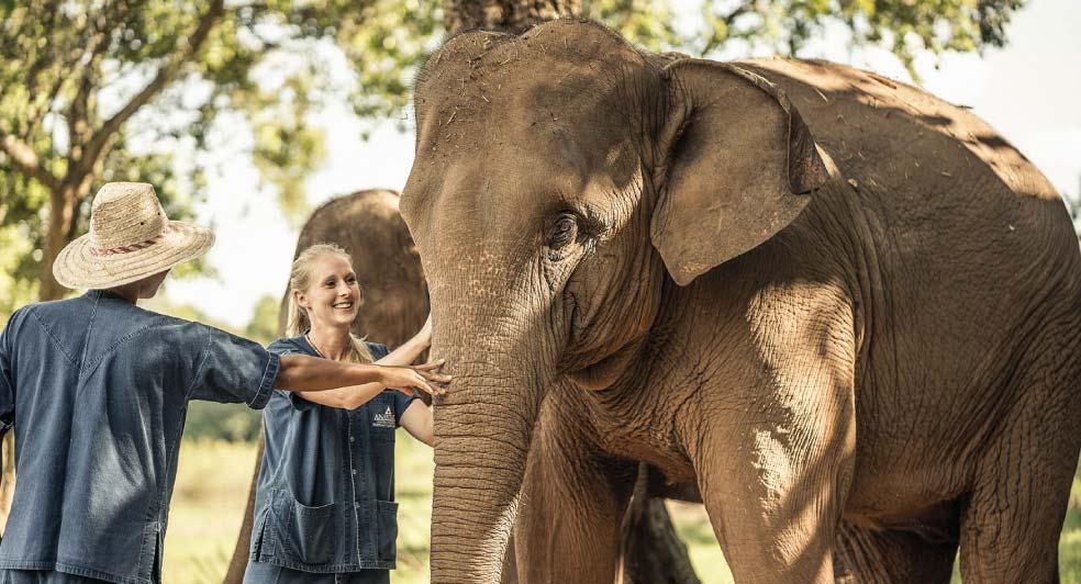 Golden trangle asian elephant foundation