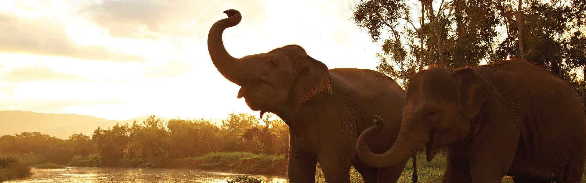 Image result for mandalay elephant photos