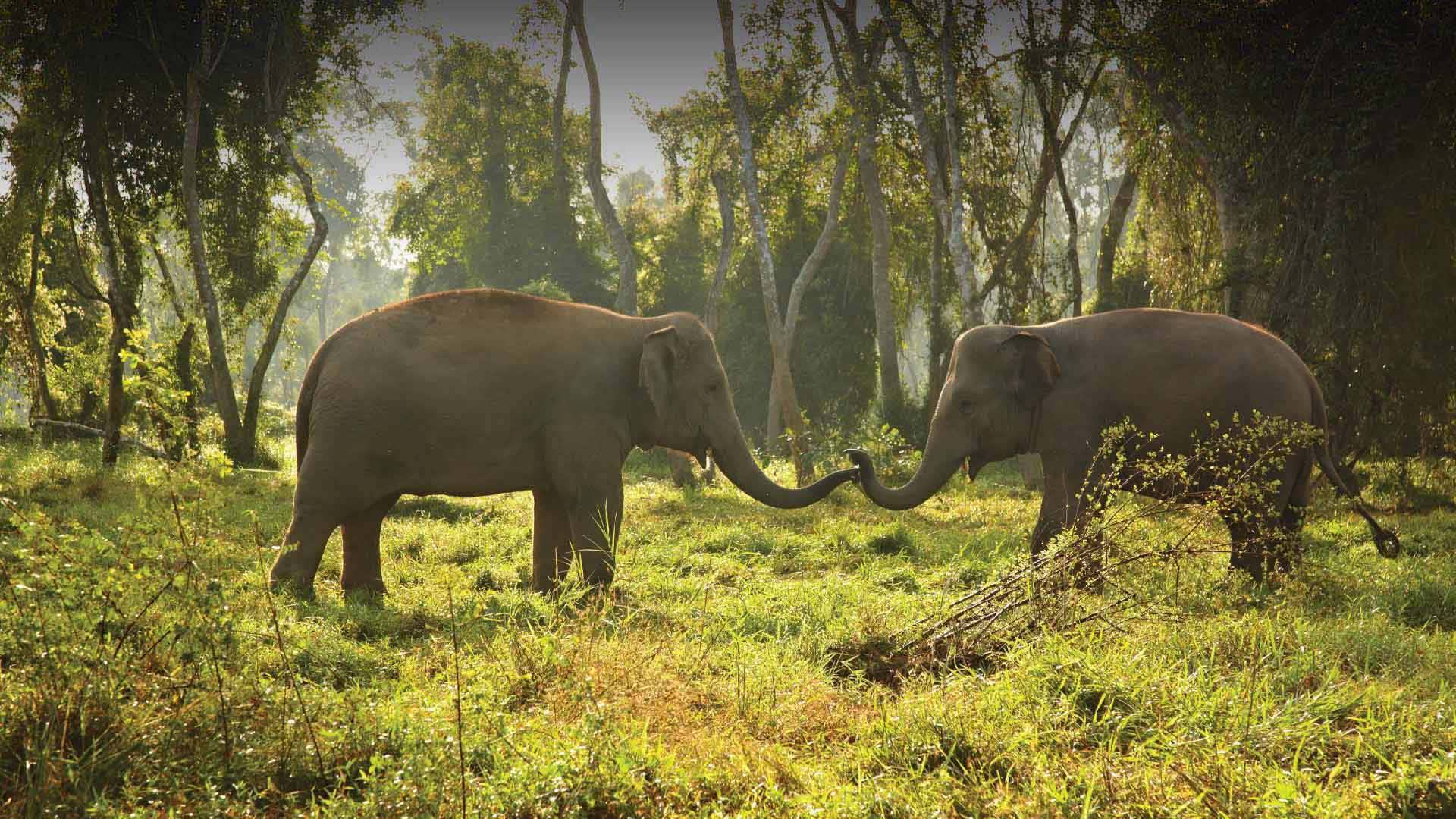 https://assets.anantara.com/image/upload/q_auto/media/minor/anantara/images/anantara-golden-triangle-elephant-camp--resort/the-resort/desktop-banner/anantara_golden_triangle_elephant_couple_header_1920x1080.jpg