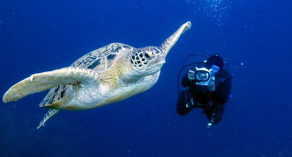 Ocean Scuba Adventure