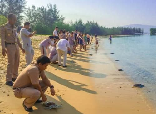 Anantara Phuket Layan Resort & Spa Hosts Rare Turtle Release