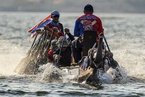 The Inaugural Elephant Boat Race & River Festival