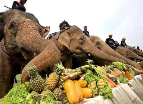 Anantara's Annual King's Cup Raises Millions For Thailand's Elephants