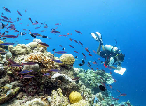 Anantara Launches Coral Protection and Regeneration Programme in the Maldives: Holistic Approach to Reef Protection (HARP)